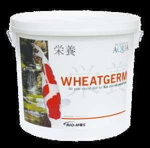 Alimentos koi evolution aqua wheatgerm for Comida para koi