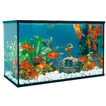 Aquarium kit happy pez 30 liters for Aquarium 30 litres