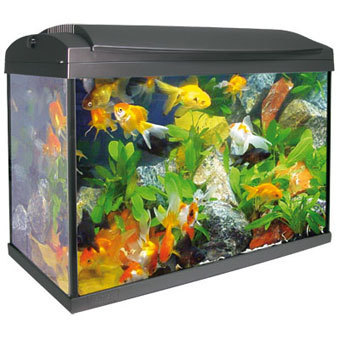 Graphite aquarium kit mini elegance 20 liters lamp and for Aquarium boule 20 litres