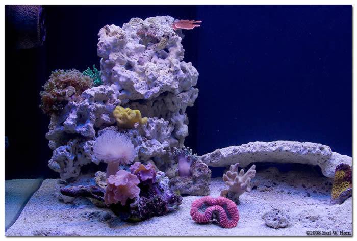 Roca viva indonesia premium 15kg acuario marino for Acuario marino precio
