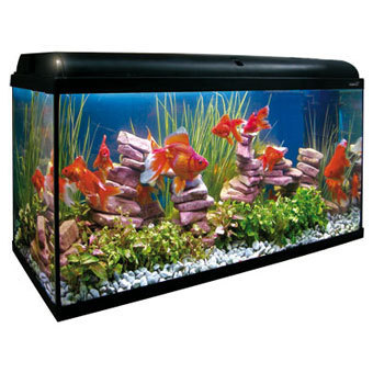 Acuario kit aqualight 300l filtro exterior acuarios baratos for Peces artificiales para acuarios