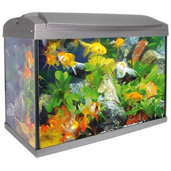 Grey aquarium kit mini elegance 20 liters lamp and filter for Aquarium elegance
