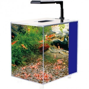 aquarium kit aqualed 7 6 liters beautiful nano aquarium. Black Bedroom Furniture Sets. Home Design Ideas