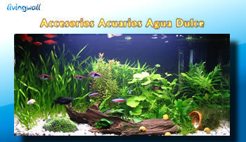 Accessories freshwater aquarium.